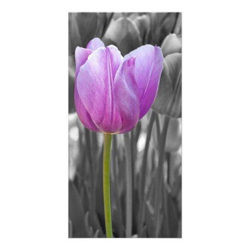 Tulipán púrpura de la primavera en blanco y negro tarjeta fotografica