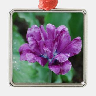 Tulipán púrpura floreciente del loro ornamentos de reyes magos