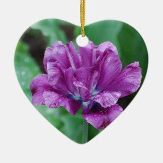Tulipán púrpura floreciente del loro ornato