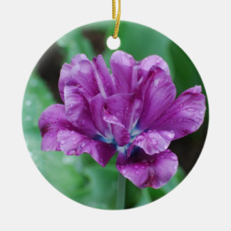 Tulipán púrpura floreciente del loro ornamento de reyes magos
