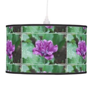 Tulipán púrpura floreciente del loro