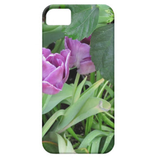Tulipán púrpura iPhone 5 funda