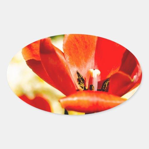 Tulipán rojo abierto calcomania óval