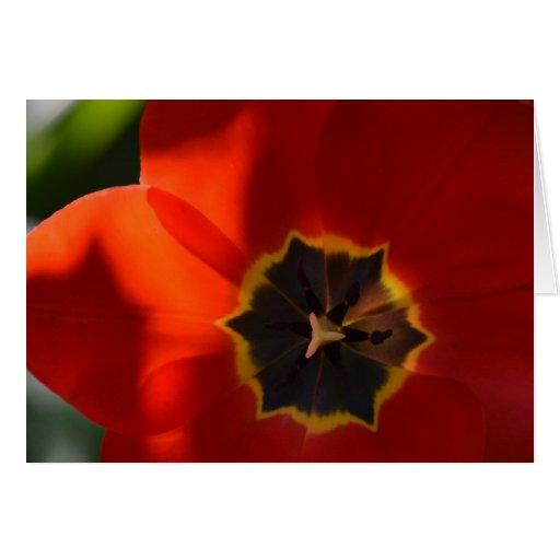 Tulipán rojo brillante tarjeta