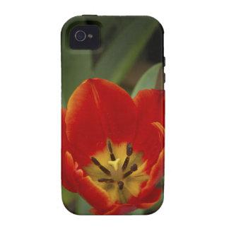 Tulipán rojo del jardín iPhone 4 carcasa