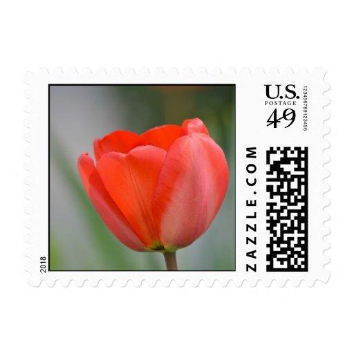 Tulipán rojo floral envio