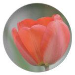 Tulipán rojo floral plato de cena