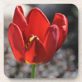 Tulipán rojo posavasos