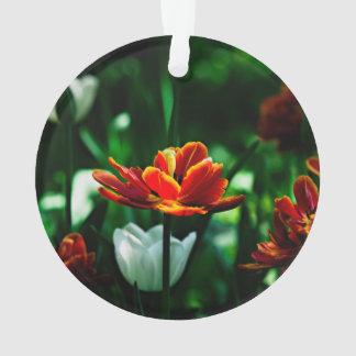 Tulipán rojo - su majestad el rey