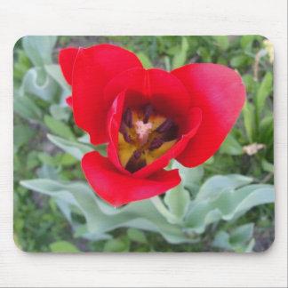 Tulipán rojo tapete de ratones