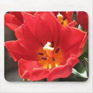 Tulipán rojo alfombrillas de ratón