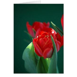 Tulipán rojo tarjeta de felicitación