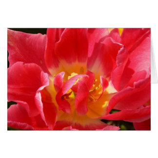 tulipán rojo tarjeta pequeña