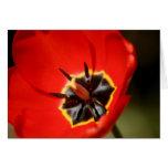 Tulipán rojo tarjeton