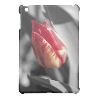 Tulipán rojo y amarillo