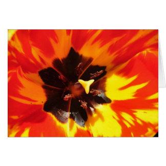 Tulipán rojo y amarillo tarjeta de felicitación