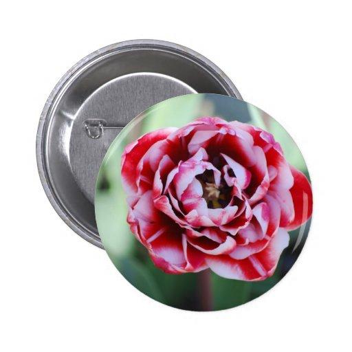 tulipán rojo y blanco pin