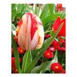 Tulipán rojo y blanco radiante tarjetas informativas