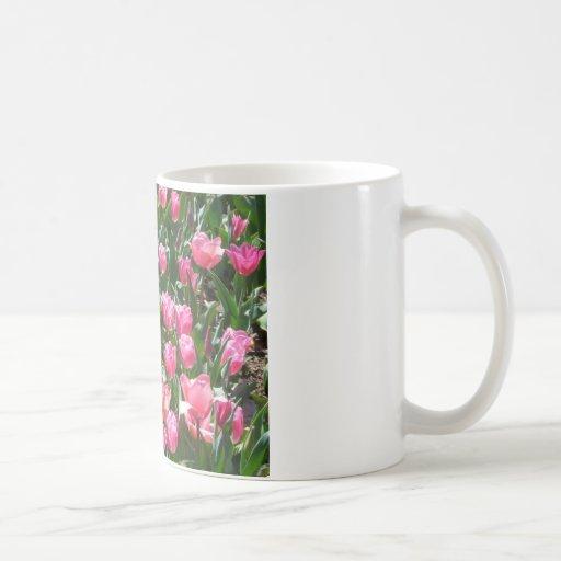 tulipán, rosa taza