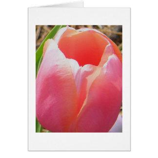 Tulipán rosado amelocotonado felicitacion