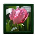 Tulipán rosado cajas de regalo
