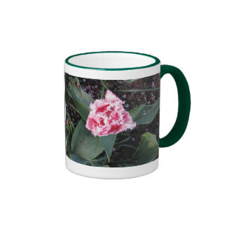 Tulipán rosado dramático tazas