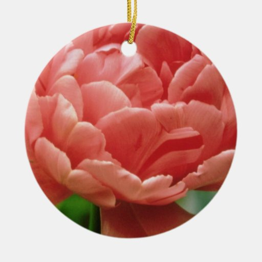 """Tulipán rosado """"eros"""", últimas flores dobles ornato"""