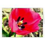 Tulipán rosado felicitacion