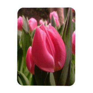 Tulipán rosado imanes flexibles