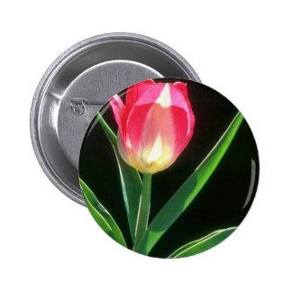 Tulipán rosado rojo de la belleza, (Tulipa Gesneri Pins