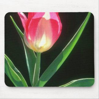 Tulipán rosado rojo de la belleza, (Tulipa Gesneri Alfombrillas De Raton