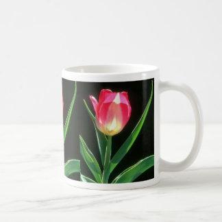 Tulipán rosado rojo de la belleza, (Tulipa Gesneri Taza Básica Blanca