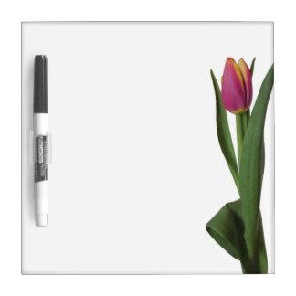 Tulipán rosado y amarillo pizarras blancas