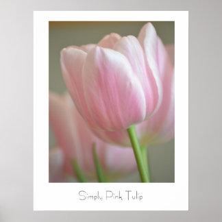 Tulipán simplemente rosado poster