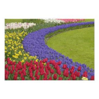 Tulipán y jardín del jacinto y del narciso de uva, fotografía