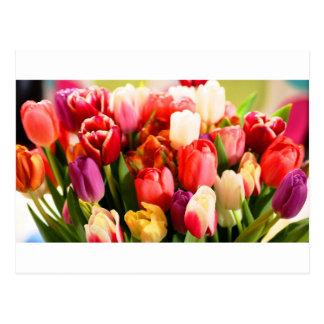 Tulipaner Postcard