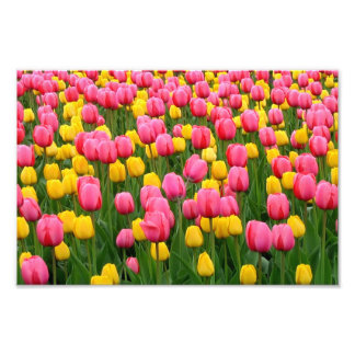 Tulipanes 1 impresión fotos