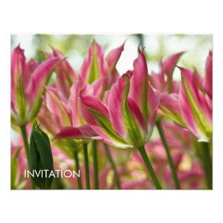 Tulipanes abigarrados DSC0796 del rosa y del verde Comunicados Personales