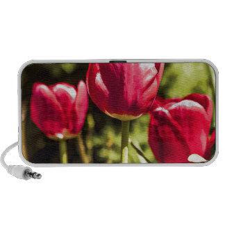 Tulipanes iPod Altavoz