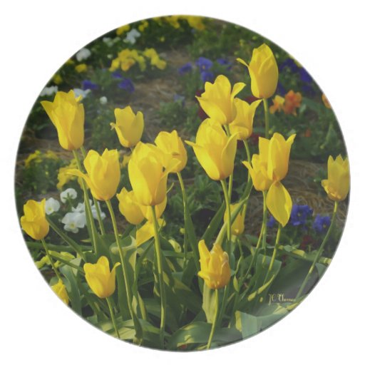 Tulipanes amarillos en la placa de la melamina platos de comidas