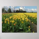 Tulipanes amarillos en un campo Holanda Impresiones