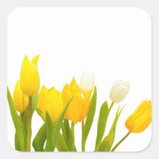 Tulipanes amarillos pegatina cuadrada