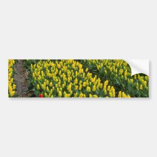 Tulipanes amarillos, Sassenheim, flores holandesas Pegatina De Parachoque