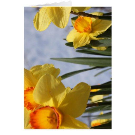 Tulipanes amarillos tarjeta de felicitación