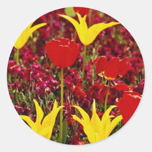 Tulipanes amarillos y rojos rojos con la parte pos pegatina