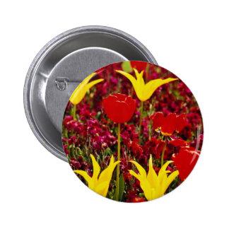 Tulipanes amarillos y rojos rojos con la parte pos pin