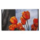Tulipanes anaranjados 2