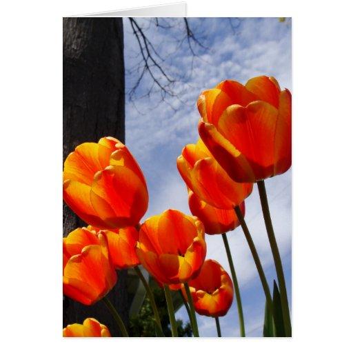 Tulipanes anaranjados 2 tarjeta de felicitación