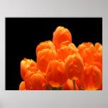 Tulipanes anaranjados impresiones