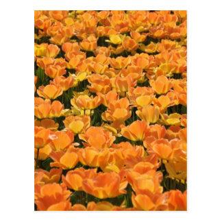 Tulipanes anaranjados y amarillos tarjeta postal
